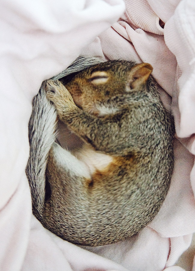 Nubby Twiglet | Meet Chubby The Squirrel
