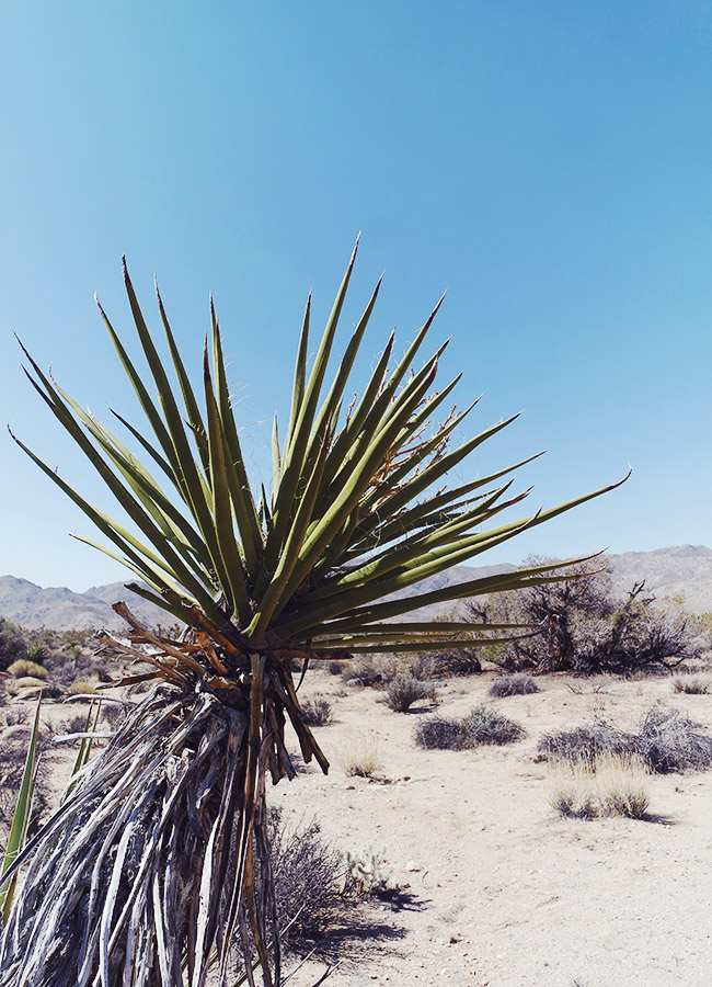 Nubby Twiglet | Out & About #8: Joshua Tree National Park