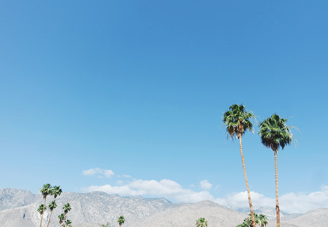 2Nubby Twiglet | Palm Springs